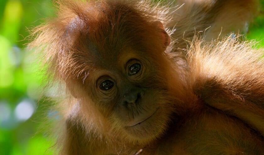 'A life on our Planet', de film van David Attenborough, draait op 2 oktober in Filmtheater Voorschoten.