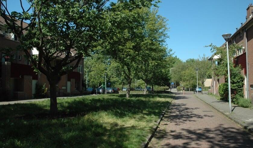 <p>De bomenmotie van GroenLinks, CDA en D66 werd door de gemeenteraad aangenomen. Er komen jaarlijks 20 bomen bij</p>