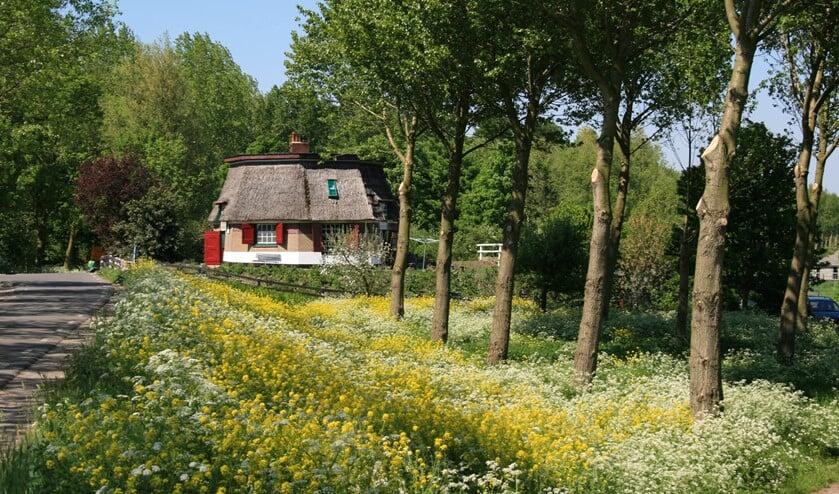 Foto: Cultuur Support Pijnacker-Nootdorp