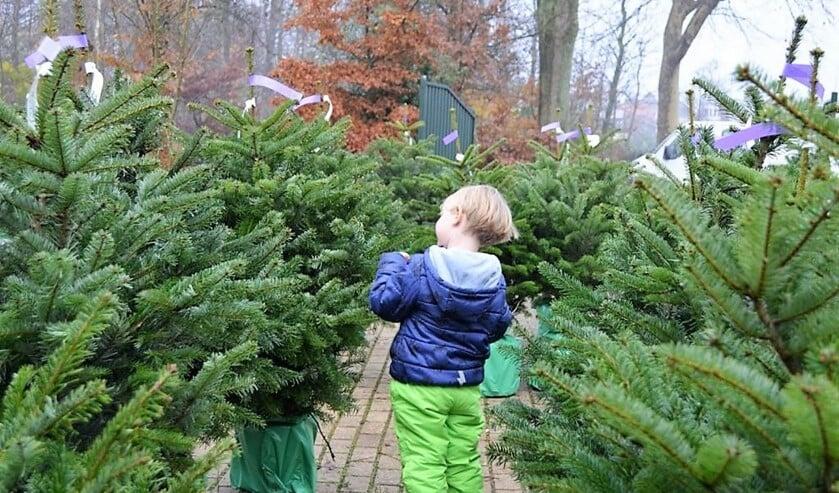 <p>Je kunt weer kerstbomen kopen op Buitengoed Dorrepaal, maar je moet wel in de auto blijven, behalve om de kersboom in te laden.</p>
