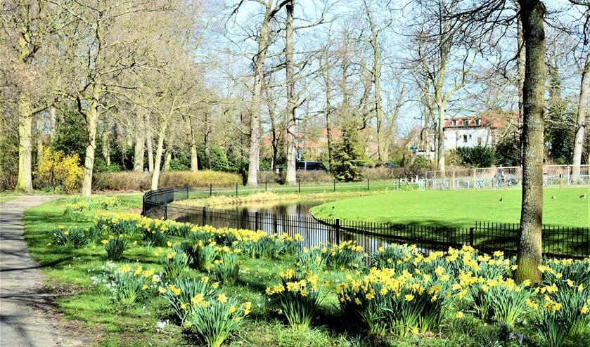 <p>Narcissen in Park Vreugd en Rust (foto: Iris Kaiser).</p>