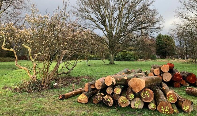 Er moet meer groen worden behouden en sociale woningbouw worden gerealiseerd op Schakenbosch (foto: Jeannet Willemsen).