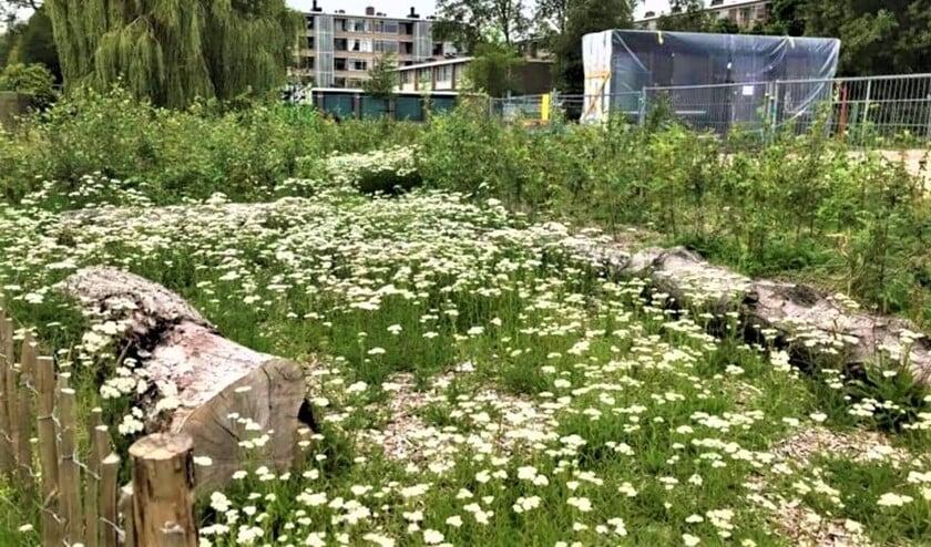 <p>Een natuurlijk bosje zo midden in de stad is wel even wennen. Het ziet er niet netjes geharkt, geschoffeld of gesnoeid uit (foto: gemeente LV).</p>