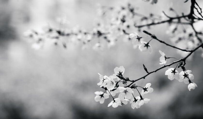 <p>Foto: Lee Imho</p>