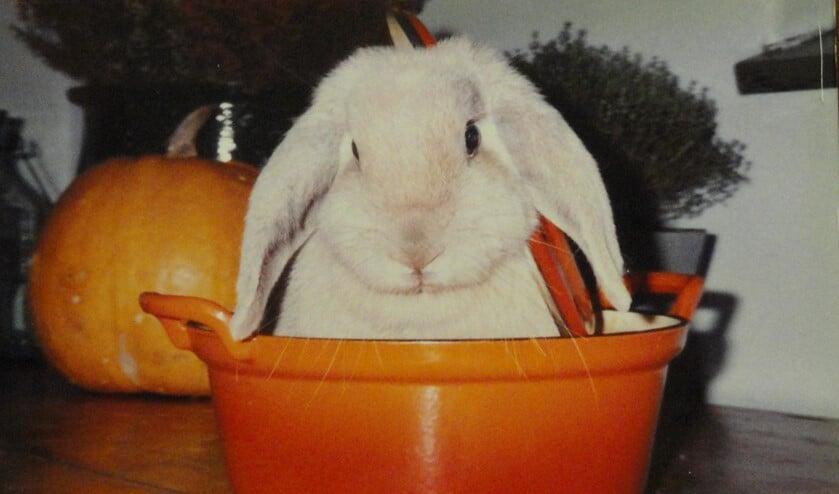 Groenteafval recyclen door een konijn in huis te nemen.