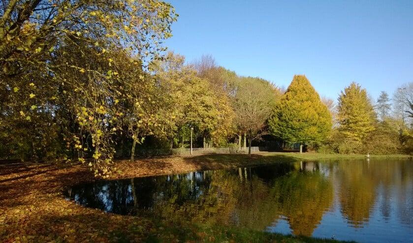 Ook in onze omgeving staan prachtige bomen.