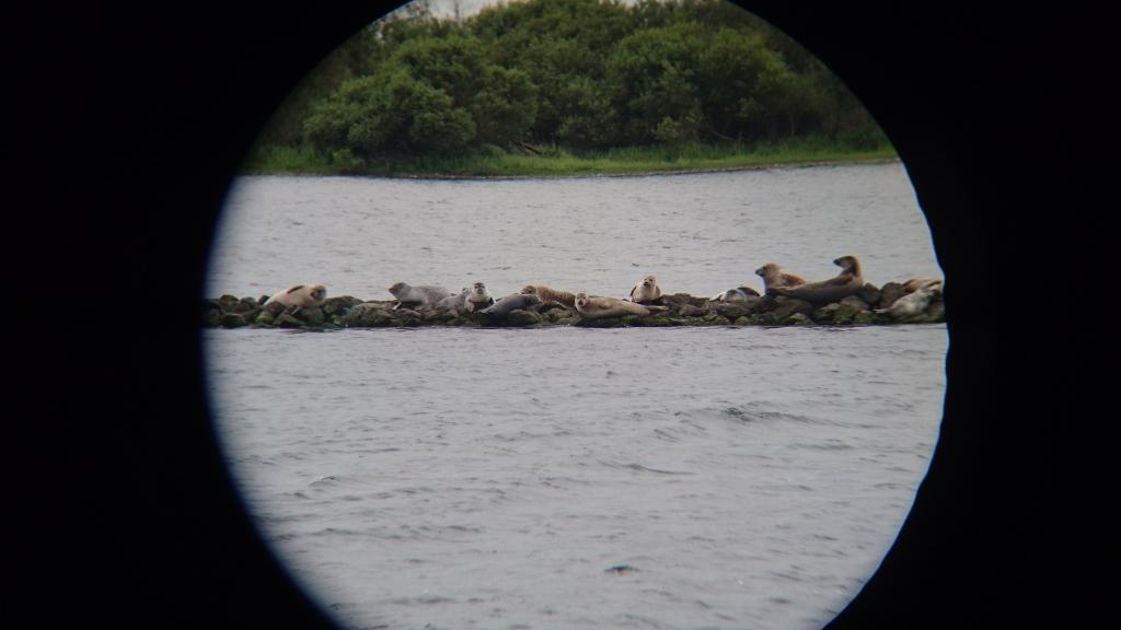 Verrekijker foto zeehonden Veermansplaat (Foto: Piet van Loon)  © GGOF.nl