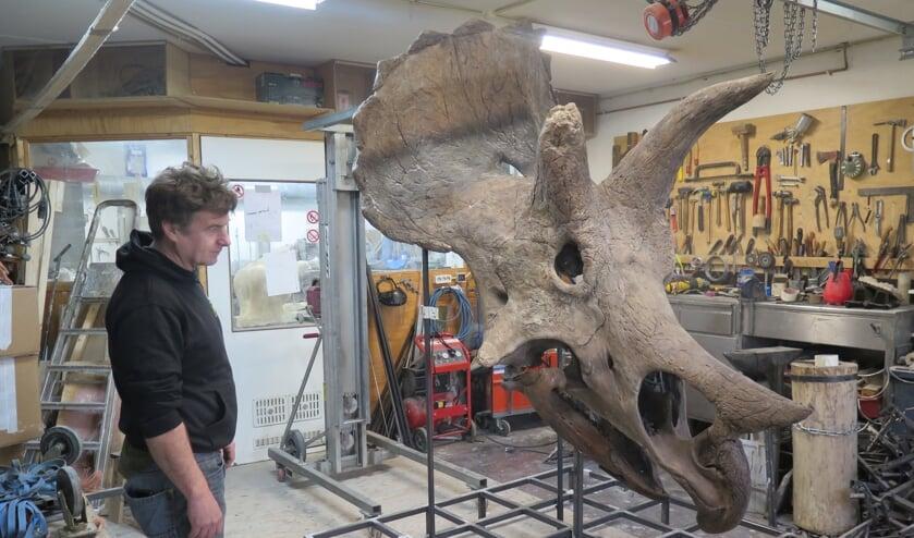 <p>De schedel van de Triceratops heeft het kenmerkende nekschild en drie hoorns</p>