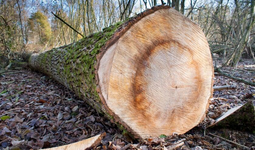 Worden gezondheid en gedrag van inwoners beïnvloed door het kappen van bomen?