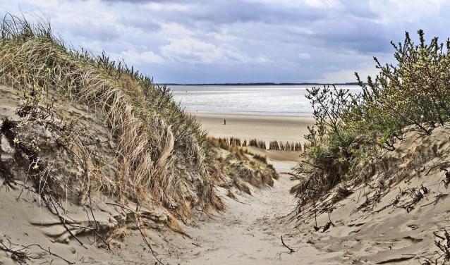 De duinen van Voorne (Foto: Jos Uijtdehaage) Jos Uijtdehaage © WeekbladWestvoorne.nl