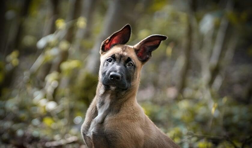 Denk goed na over de aanschaf van een hond.