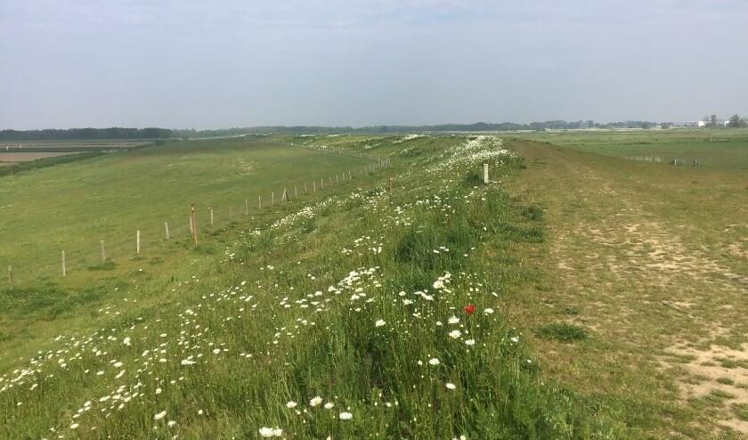 <p>Een blik op de Gorsdijk laat zien hoe een dijk verschillende biotopen kan herbergen. (Foto: PR)&nbsp;</p>