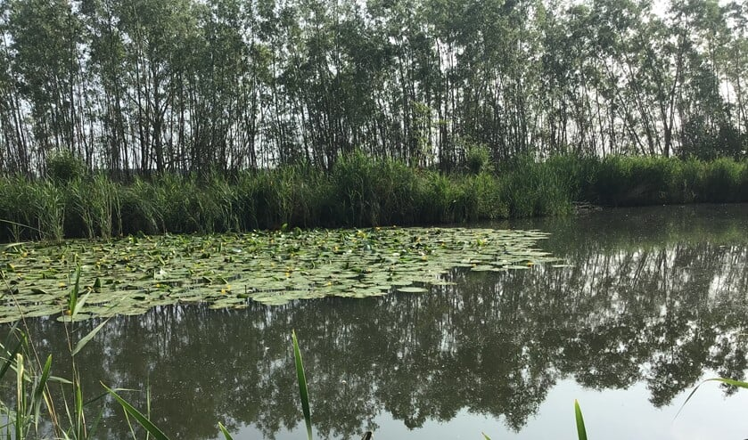<p>Een kreek in het gebied van Hollandse Delta (Foto: Water Natuurlijk)</p>
