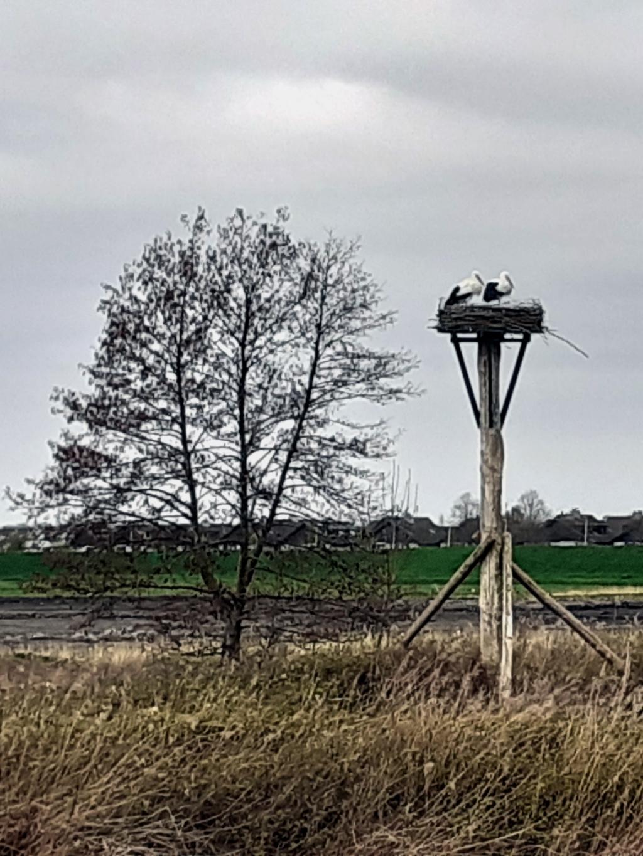 Foto: Jan van den Bos © GrootNissewaard.nl
