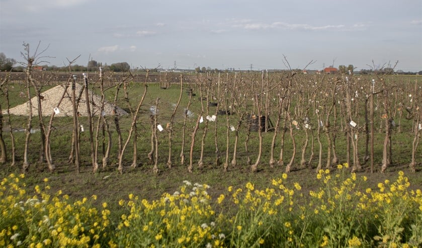 <p>Recent werden circa 1600 fruitbomen geplant.&nbsp;</p>