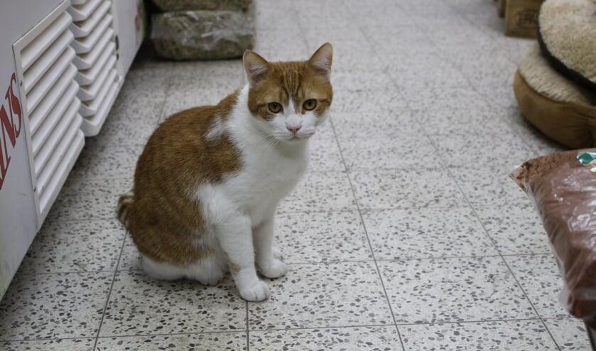 <p>Kees de Kat komt regelmatig de bezoekers van de winkel begroeten. &quot;Hij is de echte baas hier.&quot; (Foto: EvE)&nbsp;&nbsp;</p>