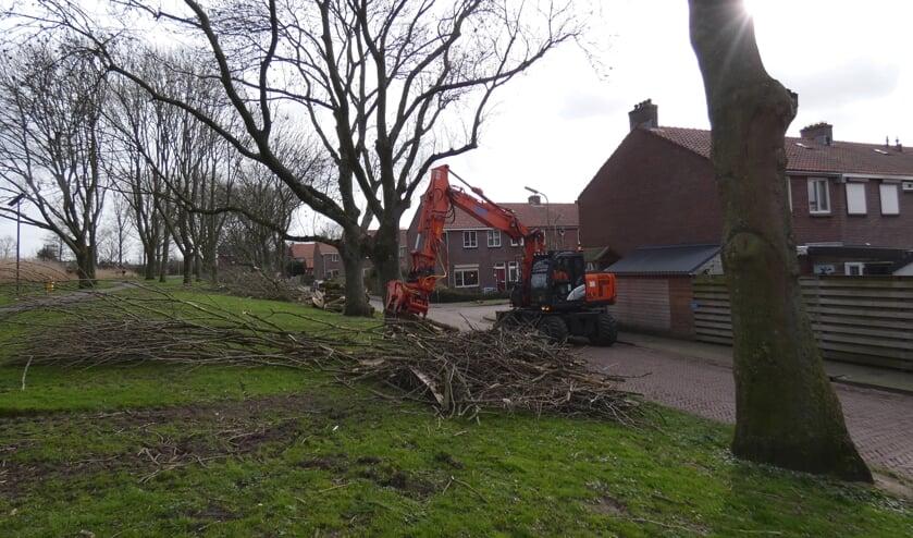 <p>Bomen langs de Petteplas werden gekapt.</p>