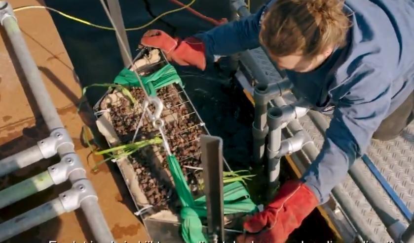 Videostill: de aquawand wordt geplaatst.