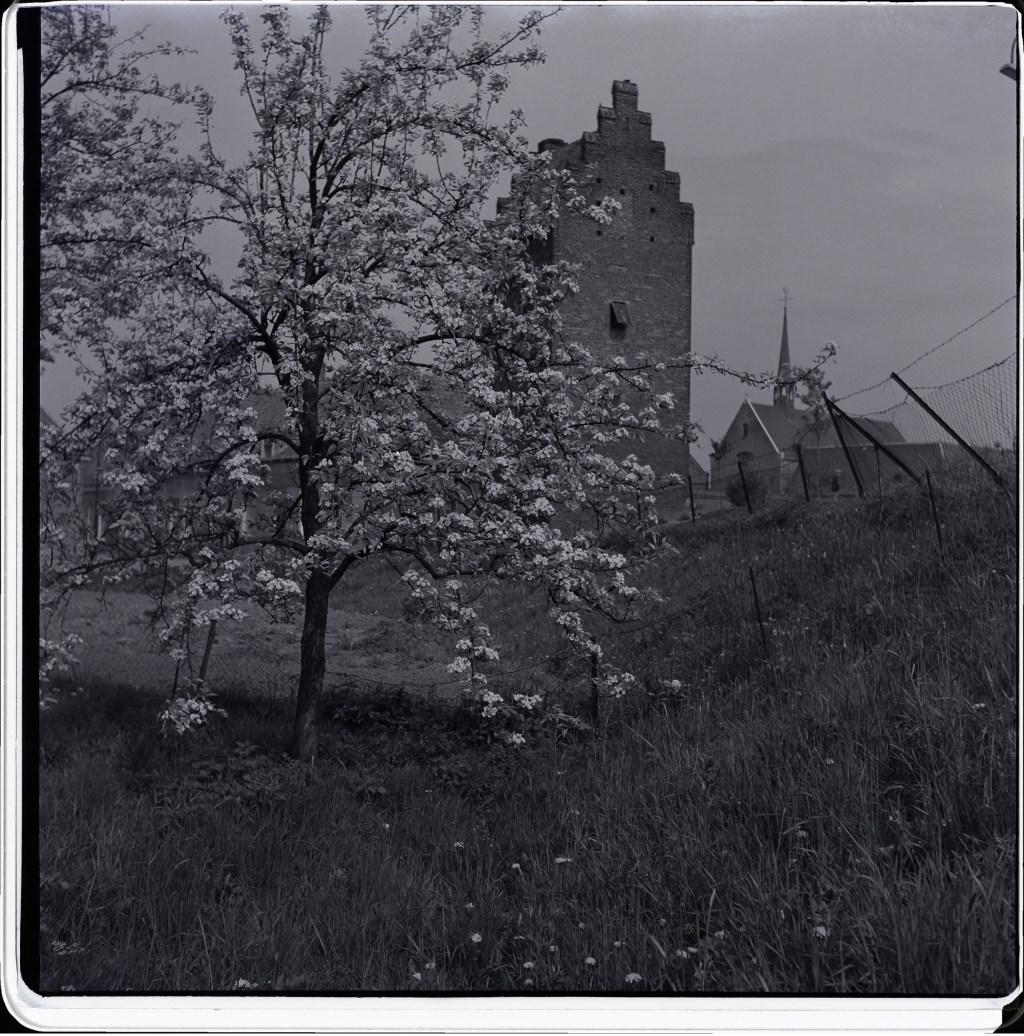 Voorjaarsbloesem in Megen, 27 april 1953. (Foto: Leo van den Bergh)  © Kliknieuws Oss
