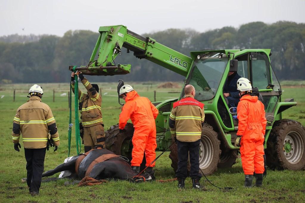 Paard in de sloot in Maren-Kessel. (Foto: Gabor Heeres / Foto Mallo)  © 112 Brabantnieuws