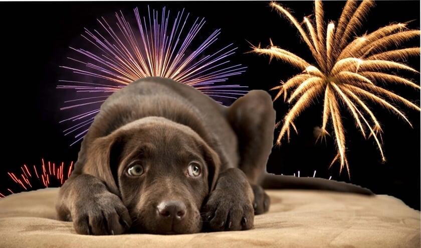 Honden met angst voor vuurwerk ervaren continue stress.