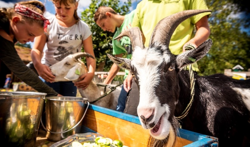 Kinderboerderijdag op NME-centrum en kinderboerderij De Elzenhoek. (Foto: Thomas Segers)