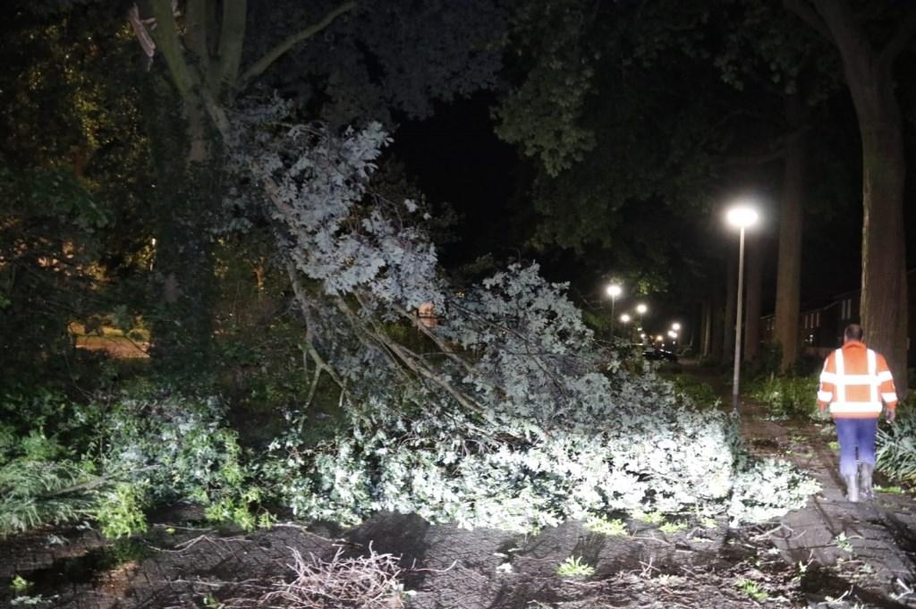 Aan de Groene Kruisstraat in Gennep brak een boom doormidden. Foto: SK-Media © 112 Brabantnieuws