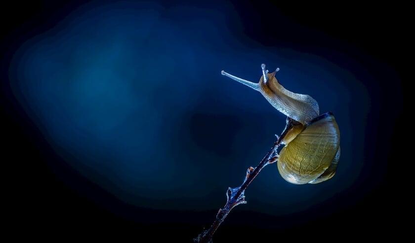 De slak, gefotografeerd door Peter Ruijs.