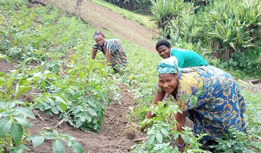 <p>De parochie Maria, Moeder van de Kerk steunt dit jaar het project &lsquo;Akkers voor ontheemde gezinnen in DR Congo&rsquo; </p>