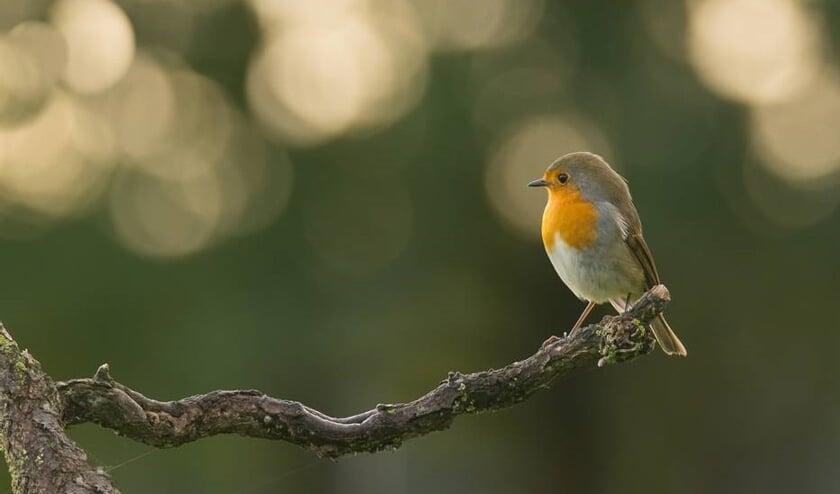 Vogelwerkgroep Boxmeer is dringend op zoek naar vrijwilligers.