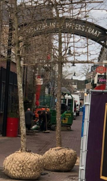 Bomen in de Peperstraat. (Foto: Dolf Warris)