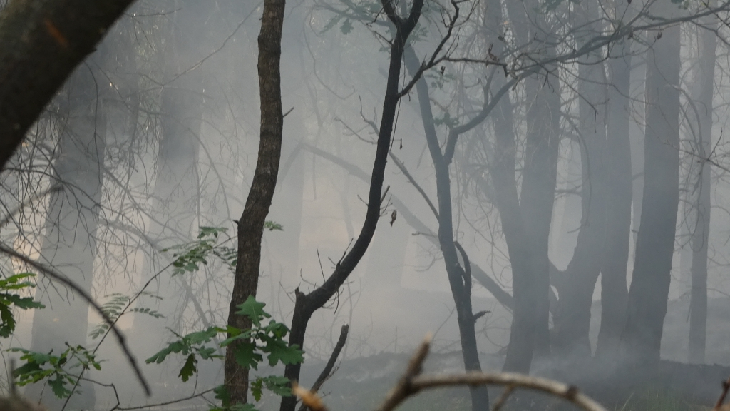 Brandweer rukt uit voor brand in bosgebied Heesch  © 112 Brabantnieuws