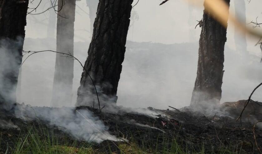 Brandweer rukt uit voor brand in bosgebied Heesch