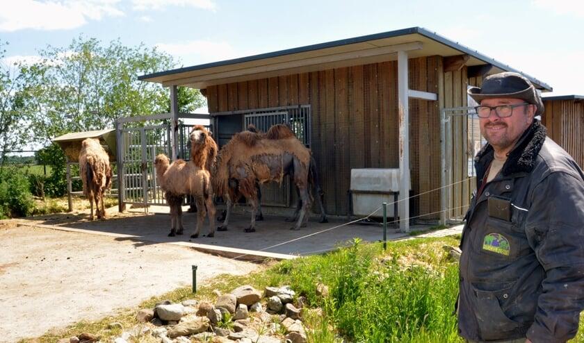 Directeur Eeg Manders bij het kamelenverblijf, waar deze maand een kameelveulen werd geboren. (foto: Henk Lunenburg)