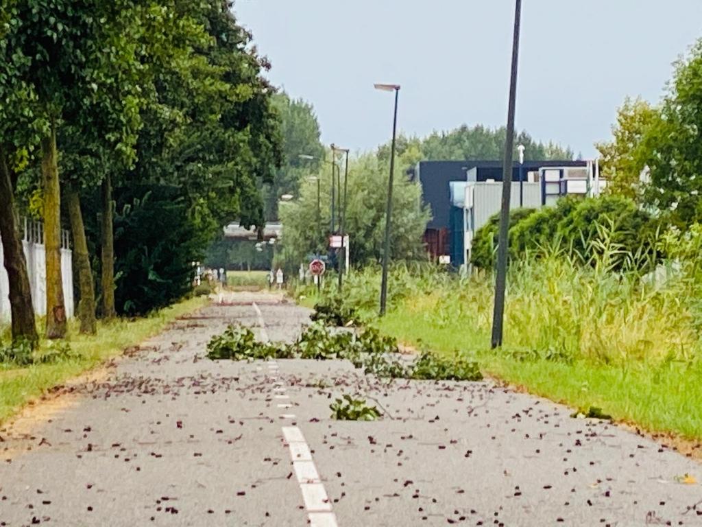 Losse takken aan de Taylorweg. Foto:  © Kliknieuws Veghel