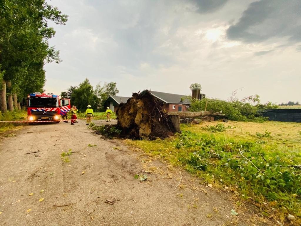 Aan het Boterpad in Eerde zijn meerdere bomen omgewaaid. Foto:  © Kliknieuws Veghel