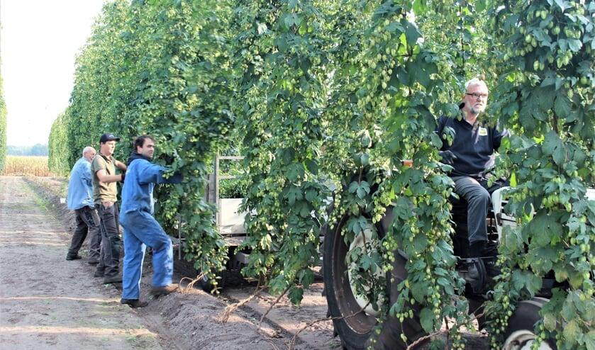 Giel Bongers (met pet) en zijn trouwe helpers weten de oogst vakkundig binnen te halen