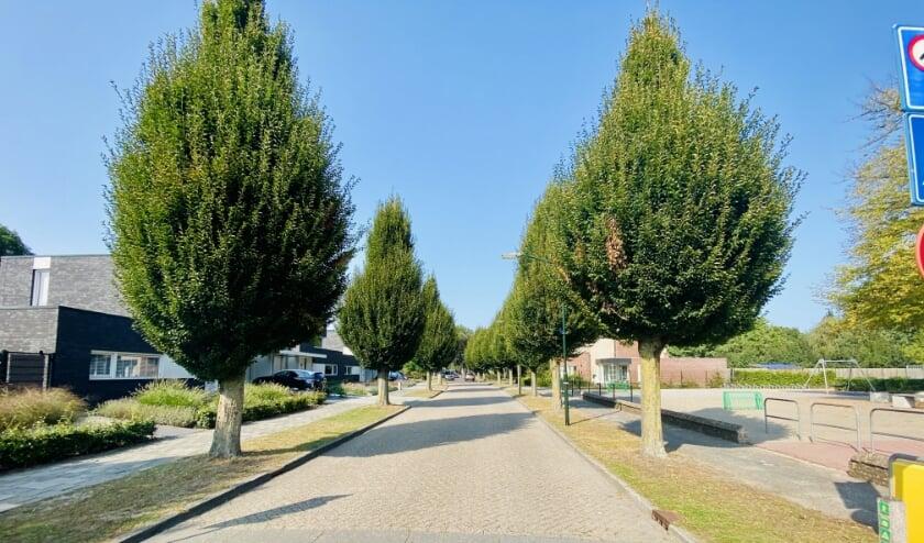 <p>De bomen in de Kolonel Johnsonstraat.</p>