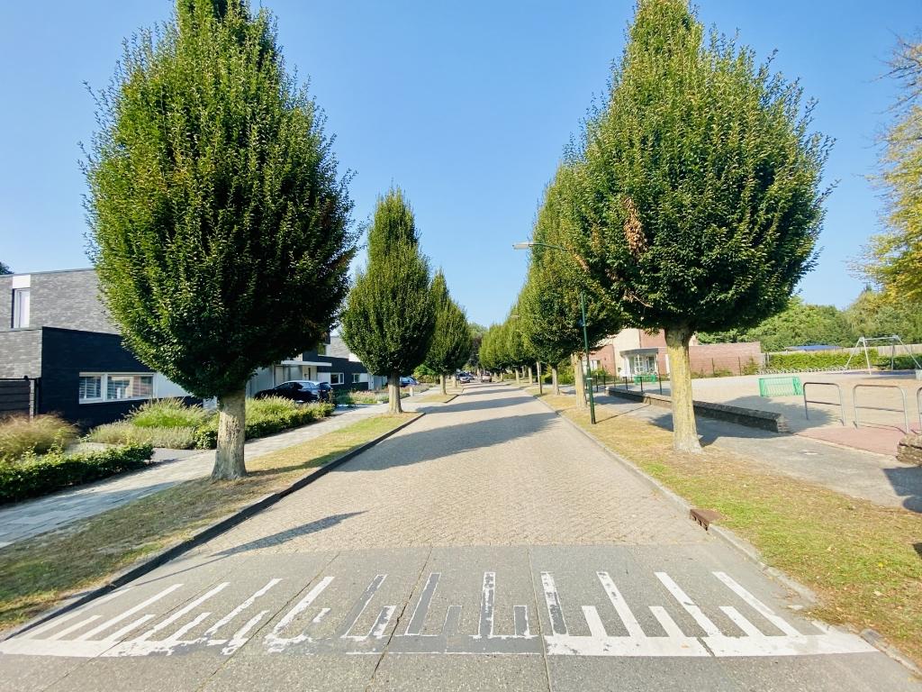 Het is nog maar de vraag of deze bomen in de Kolonel Johnsonstraat behouden blijven.   © Kliknieuws Veghel
