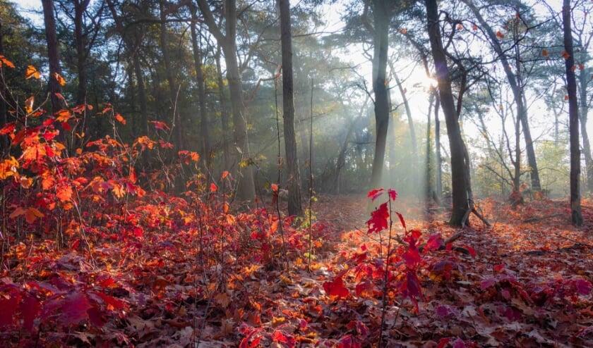 """""""De herfst is de mooiste tijd van het jaar om natuurfoto's te gaan maken"""", aldus Ronald."""