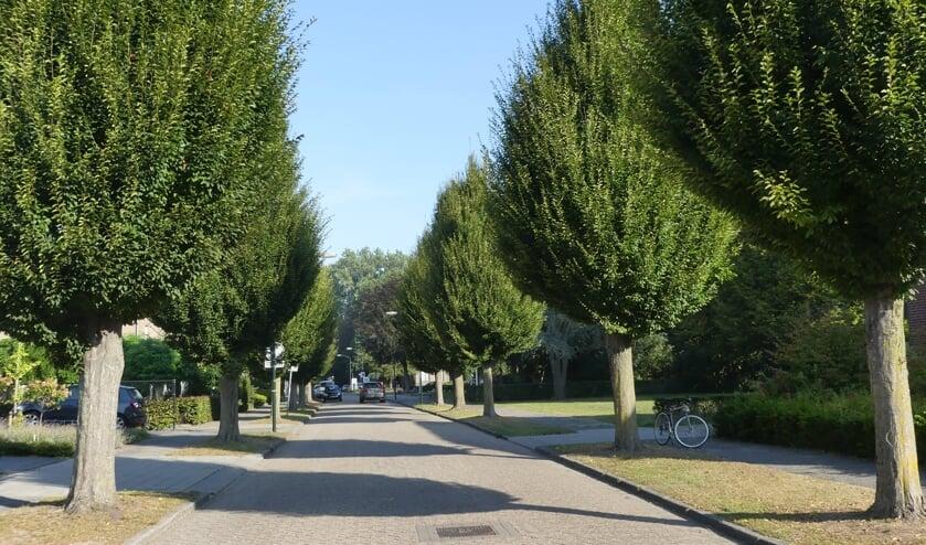 De bomen in de Kolonel Johnsonstraat.