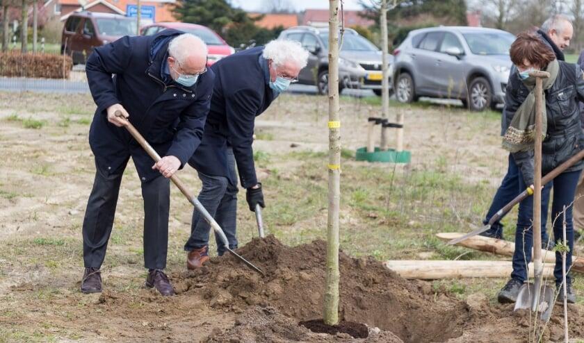 De nazaat Anne Frankboom is dinsdagmiddag geplant in Overloon.