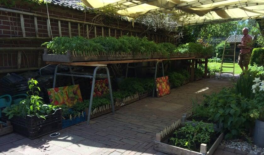 <p>Op de moestuinplantenmarkt zijn veel bijzondere planten te vinden.</p>