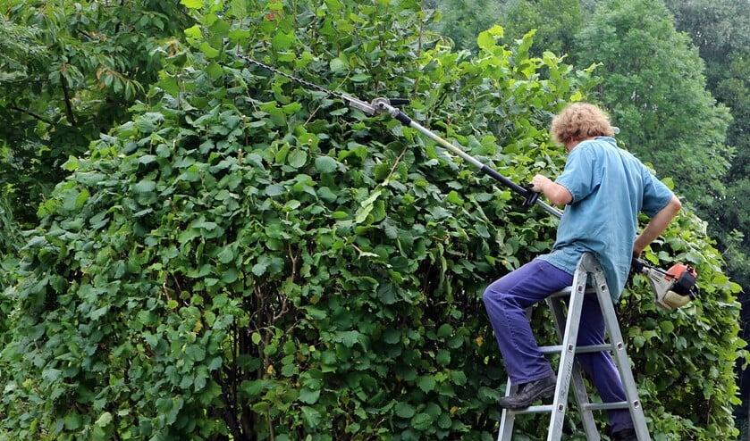 <p>De gemeente roept op om overhangend groen te snoeien. U helpt daarmee gevaarlijke situaties te voorkomen.</p>