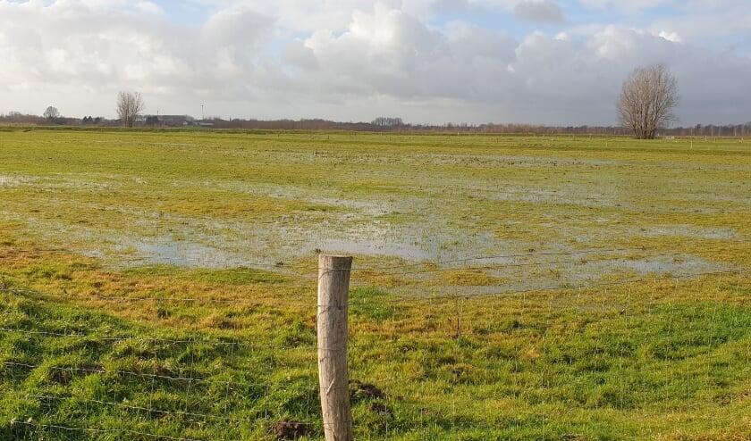<p>IJsclub Rijsoord & Omstreken besloot eind vorig jaar al de landijsbaan niet onder water te zetten</p>