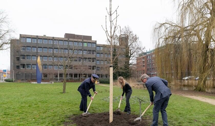 <p>Wethouder Peter Meij, kinderburgemeester Maylin Ouwens en Jan -Paul van het veteranencomit&eacute; hanteerden de spades voor het planten van de boom.</p>