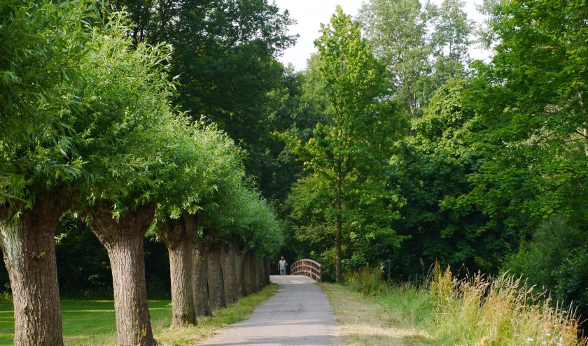 Het 'wilgenlaantje' in park De Houtkamp, zo'n mooie groene oase die de gezondheid goed doet.
