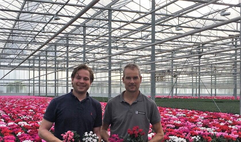 Willem Rolvink en Chris Endhoven tussen de cyclamen.