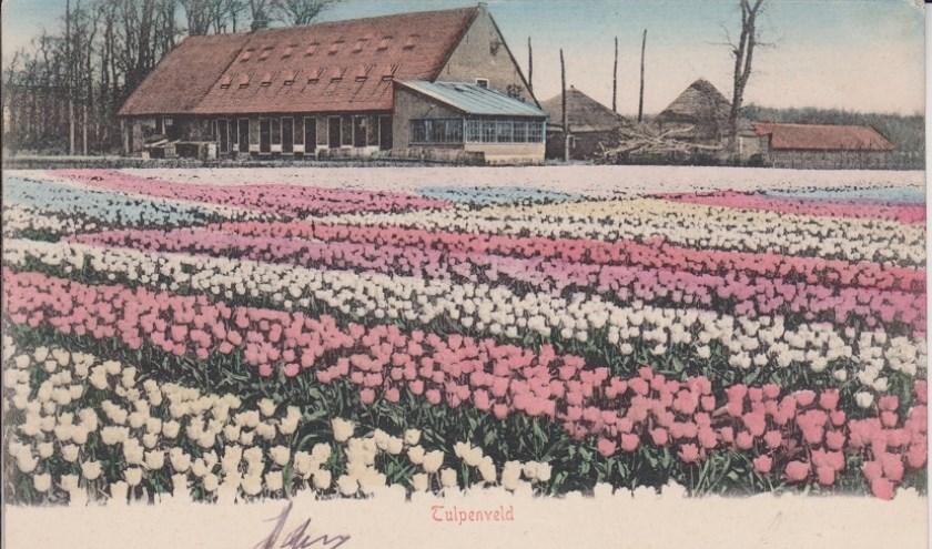 Prentbriefkaart boerderij Druivenstein in gebruik bij de firma Van der Schoot. (1906). | Foto: genootschap Oud De Zilck