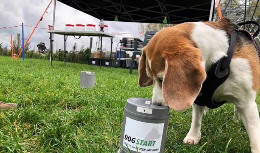 <p>Het reukvermogen van een hond is duizend keer groter dan dat van een mens.&nbsp;</p>